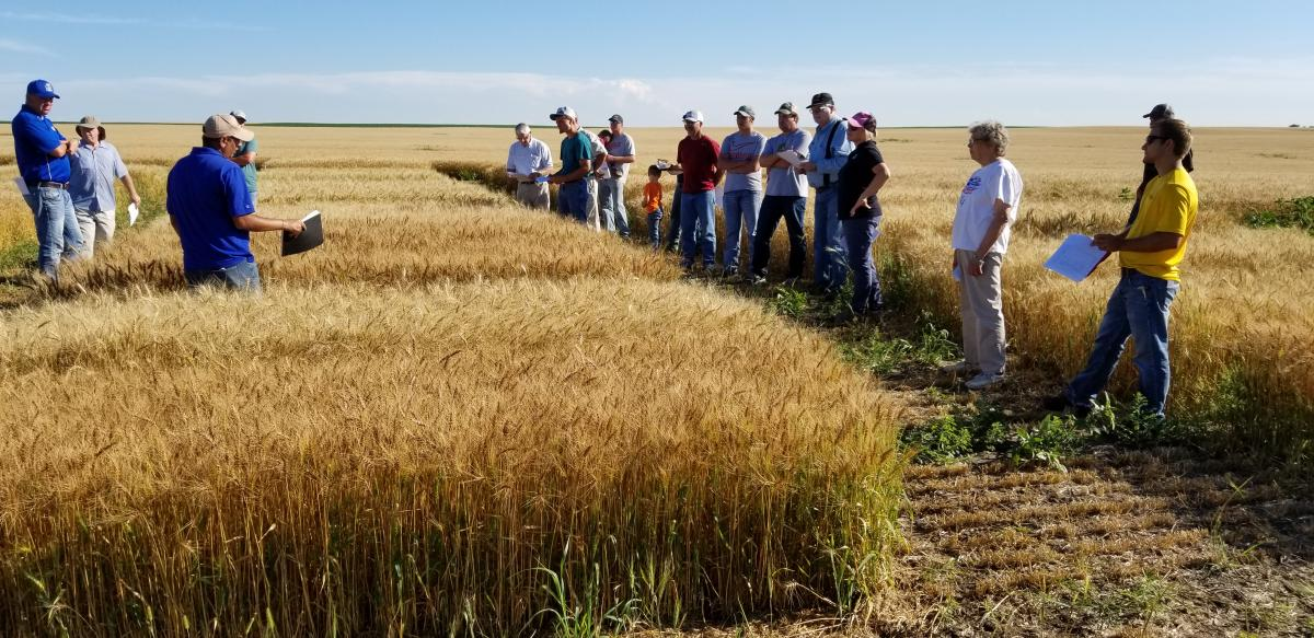 https://extension.sdstate.edu/winter-wheat-variety-trial-results