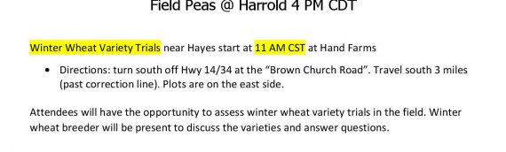 SDSU Hosts Tours in Pierre Area Winter Wheat/Field Peas